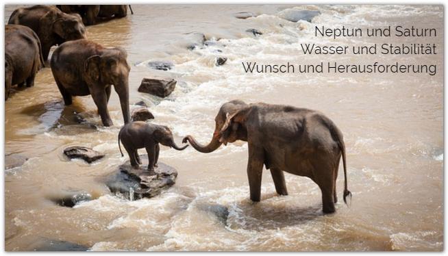 mit Enttäuschungen umgehen: Elefantenfamilie überquert einen Fluß